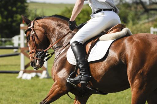 Les cours d'équitation cheval du Centre équestre d'Aurin