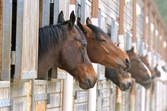 pensions pour chevaux au Centre Équestre d'Aurin